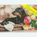 Dachshund - Diamond Painting pakket - Diamond Art Pakket met vierkante diamantjes