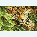 Leopard in Repose - borduurpakket met telpatroon Dimensions