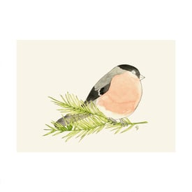 Set à 8 Vogelkarten / Pack of 8 Bird Postcards | Illustration Lilli Gärtner | Artikelnummer: lilli_vogel_alle