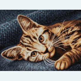 Cat Barsik - Diamond Painting pakket - Diamond Art | Pakket met vierkante diamantjes | Artikelnummer: da-az-1700