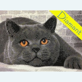 British Cat - Diamond Painting pakket - Diamond Art | Pakket met vierkante diamantjes | Artikelnummer: da-az-1463