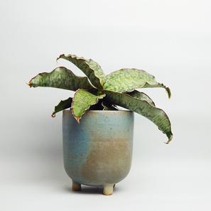 The Botanical Room Moderne Pflanzen Accessoires Online Kaufen