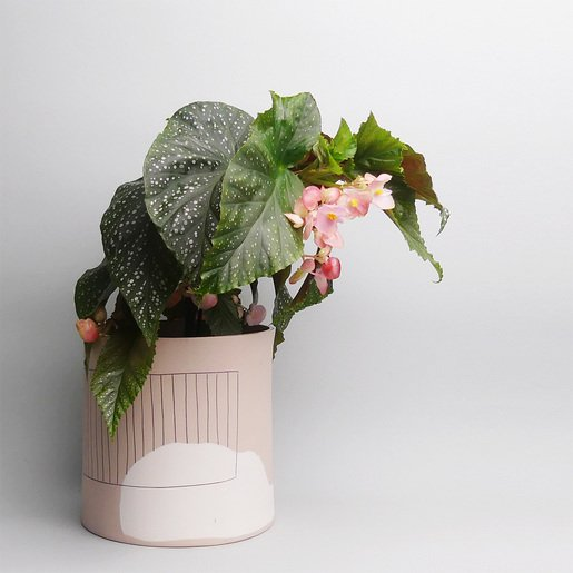 Anna Beam Keramik online kaufen- The Botanical Room
