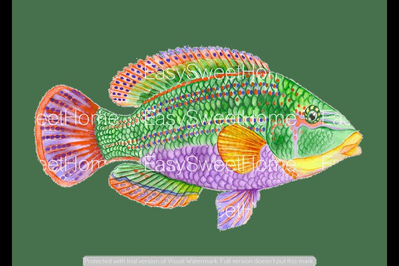 Easysweethome wandtattoo tropischer fisch 1tlg fliesenaufkleber wandtattoo m belaufkleber - Fliesenaufkleber fische ...